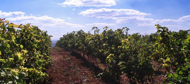 Винопроизводител оцелява със собствени средства