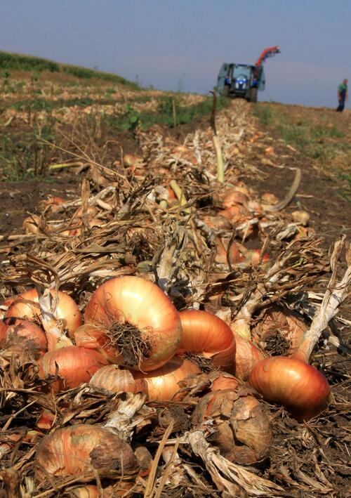 Полскотръмбешки села възраждат зеленчукопроизводството