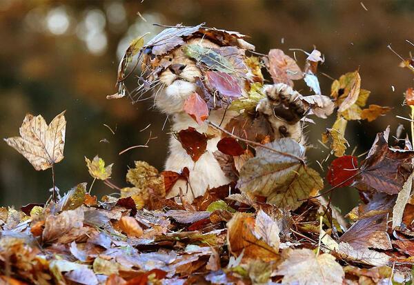 Животни се дивят на магичната есен, а ние на тях
