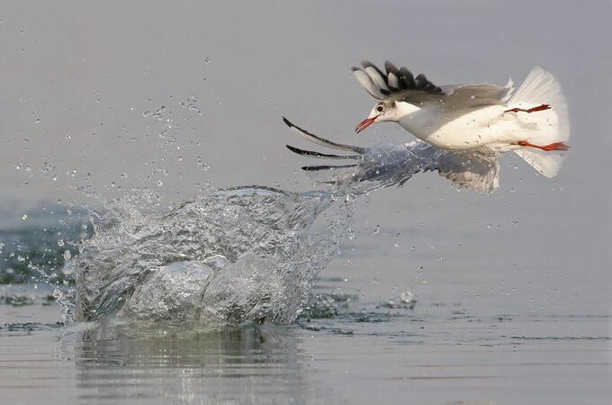 Беленските острови - от международно значение за застрашените видове птици +СНИМКИ
