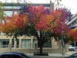 Есенни багри за радост на очите!