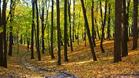 Празник в гората ще зарадва деца в Севлиевско и В.Търново