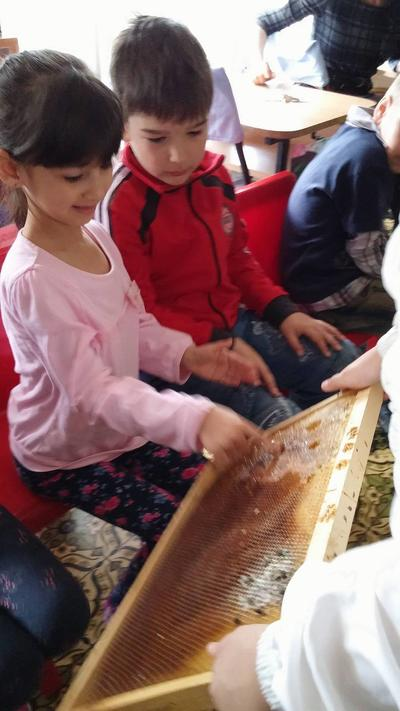 Малчугани садиха цветя и научиха за пчелите отблизо