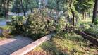 Буря наводни къщи, повали дървета и унищожи реколтата в Русенско