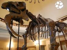 Музей по палеонтология