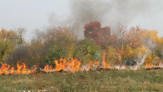 Овладян е пожарът край Свищов