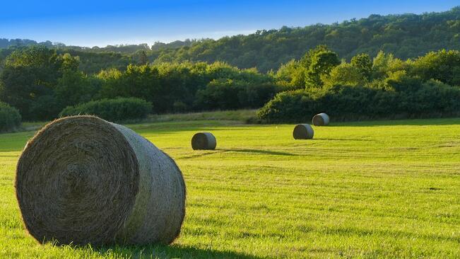 """Държавен фонд """"Земеделие"""" определи помощите, които ще получат земеделските стопани"""